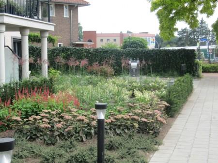 Kleurige planten in de tuin hovenier in borculo